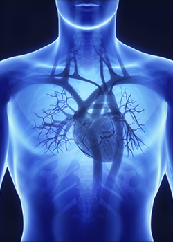 Heart, Lung, Vascular Update for the Primary Care Providers